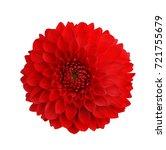 Dahlia Red Isolate On White...