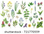 hand drawn watercolor set green ... | Shutterstock . vector #721770559