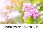 close up and selective focus... | Shutterstock . vector #721788844