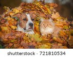 Stock photo cat and dog sitting in a pile of leaves in autumn 721810534