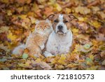 cat and dog in the leaves in... | Shutterstock . vector #721810573