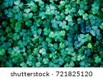 Clover Leaves  Backdrop