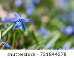 blue spring flower scilla...   Shutterstock . vector #721844278
