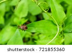 the tiny bug  | Shutterstock . vector #721855360
