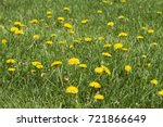 weeds in a lawn. | Shutterstock . vector #721866649