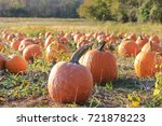 A Pumpkin Patch In Maryland