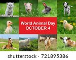 4th october. world animal day   Shutterstock . vector #721895386