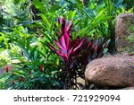 seychelles endemic and unique... | Shutterstock . vector #721929094