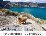 Llama Near Quilotoa Crater Lak...