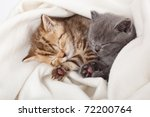 Stock photo two little funny scottish fold kittens isolated on a white background 72200764