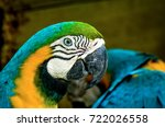 blue and gold macaw taiping zoo ... | Shutterstock . vector #722026558