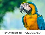 blue and gold macaw taiping zoo ... | Shutterstock . vector #722026780
