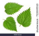 Nettle Leaf Isolated