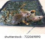 Mice Trapped  Kill Mice  Trap...