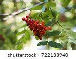 bunch red berries rowan tree... | Shutterstock . vector #722133940