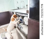 Small photo of Dog licking dishes in the dishwasher. Fun pet. Humour