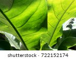 green leaves close up | Shutterstock . vector #722152174