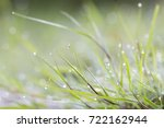 grass in dew early morning ... | Shutterstock . vector #722162944