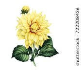 dahlia and leaves  watercolor ... | Shutterstock . vector #722208436