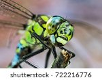 Stock photo focus stacking blue hawker southern hawker common hawker dragonfly hawker dragonfly 722216776