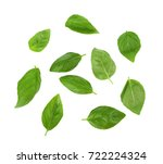 green fresh basil leaves on... | Shutterstock . vector #722224324