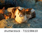 Stock photo cat with kittens 722238610