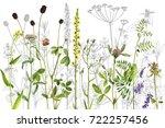 watercolor drawing wild plants...   Shutterstock . vector #722257456