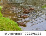 the ducks in a pond  | Shutterstock . vector #722296138