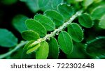 Small photo of water droplets adoring leafs
