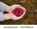 Girl Picking Berries In The...