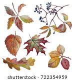 Autumn Leaves With Wild Grapes...
