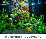 Freshwater Aquarium With Red...