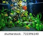 Freshwater Aquarium With Red...