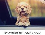 dog peeking out of a car window | Shutterstock . vector #722467720