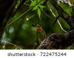 Small photo of low-key and bottom-up view of Coppersmith bird on tree