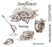 sketch of a sunflower plant and ...   Shutterstock .eps vector #722477470