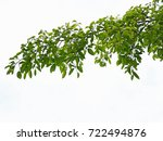 green leaves and branches on... | Shutterstock . vector #722494876
