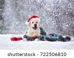 happy labrador dog in santa hat ... | Shutterstock . vector #722506810