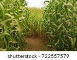 Closeup Inside A Corn Maze...