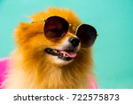 Stock photo a pomeranian spitz puppy is wearing sunglasses 722575873