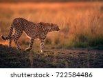 Cheetah During Dusk In Savannah ...