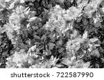 black and white chrysanthemum... | Shutterstock . vector #722587990
