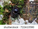 brown rhinoceros beetle female... | Shutterstock . vector #722613580