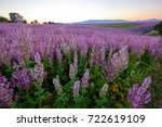 field of clary sage in the... | Shutterstock . vector #722619109