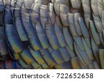 color turkey feathers | Shutterstock . vector #722652658
