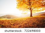 Awesome image of the shiny beech tree on a hill slope at mountain valley. Dramatic scene. Orange and yellow leaves. Location place Carpathians, Ukraine, Europe. Beauty world. Breathtaking wallpaper. - stock photo