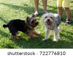 portrait of two dogs | Shutterstock . vector #722776810