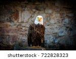 Beautiful Bald Eagle  Lat....
