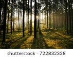 sunrise in the forest | Shutterstock . vector #722832328