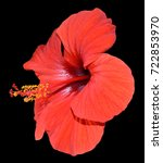 flower of hibiscus isolated on... | Shutterstock . vector #722853970